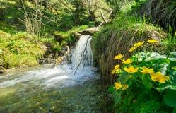Marigolds έλους και ένας μικρός καταρράκτης Άλπεις, Βαυαρία στοκ εικόνες