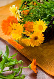 Marigolds Royalty Free Stock Photos