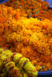 Marigolds Stock Images