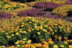 Marigolds Fall Flowers Planted in a Pattern. Marigolds and other fall flowers at the Quilt Garden in North Carolina stock photography