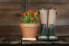 Marigolds and Garden Boots Royalty Free Stock Image