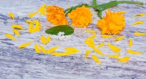 Marigolds, globules, homeopathy Stock Photography