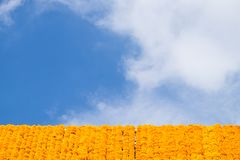 Marigolds line with blue sky Royalty Free Stock Photos