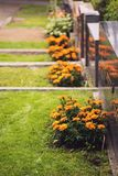 Marigolds planted next to graves in a finnish graveyard. Marigolds flowers planted next to graves in a Finnish graveyard from Tampere, called Kalevankangas stock photos