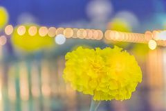 Marigolds,Tagetes,Tagetes erecta , Asteraceae,flower with with the bokeh, beam, light and Stock Photo