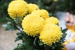 Free Marigolds (Tagetes Erecta, Mexican Marigold, Aztec Marigold, Stock Photography - 75634782