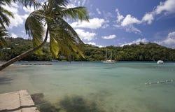 Marigot Bay, St. Lucia. Palm tree and shoreline, Marigot Bay, St. Lucia Royalty Free Stock Images