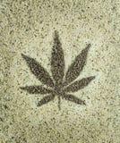 Marihuan konopianych ziaren liścia zakończenie w górę tła fotografia royalty free