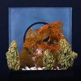 Marihuan nugs i rozbijają odosobnionego na czarnym tle obrazy stock