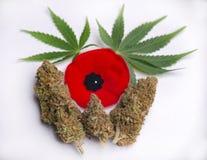 Marihuan nugs z marihuany czerwieni i liścia maczkami na wh obrazy stock
