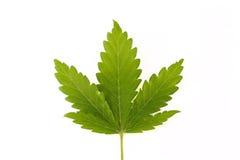 marihuana zdjęcie royalty free