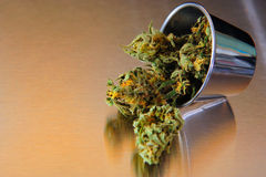 Marihuana. Nice Closse up view of marihuana on stainless steel Royalty Free Stock Photo
