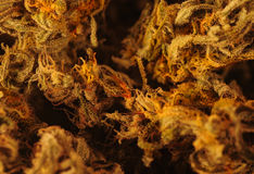 Marihuana. A Beautiful Extreme macro of a Marihuana Bud Stock Images
