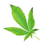 marihuana Obrazy Royalty Free