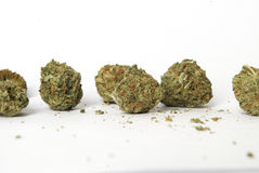 marihuana Lizenzfreies Stockfoto
