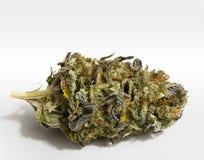 Marihuana auf Weiß Stockfoto