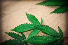 Marihuana-Blätter Stockfoto