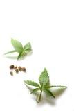 Marihuana-Blätter und Startwerte für Zufallsgenerator Lizenzfreies Stockbild