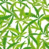 Marihuana, Cannabis naadloos patroon Vectorachtergrond van verlof Stock Foto's