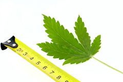 Marihuana in centimeters Stock Photo