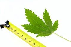 Marihuana in den Zentimeter Stockfoto