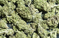 Marihuana-Hintergrund Stockfotos