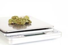 Marihuana-Knospen auf Skala Stockfotos