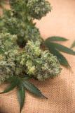 Marihuana kwitnie bukiet z marihuana liśćmi nad burlap backg Obraz Stock