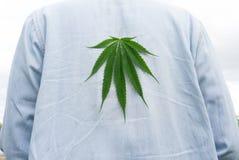 Marihuana lässt auf alte Blue Jeans, Marihuana auf der Rückseite t Lizenzfreies Stockbild