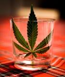 Marihuana Leaf Royalty-vrije Stock Foto's