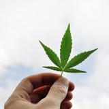 Marihuana liść Zdjęcie Stock
