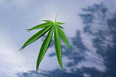 Marihuana liść na błękit ziemi Obrazy Royalty Free