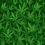 Marihuana liści wzór Obraz Stock