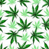 Marihuana liścia wzór Obraz Stock