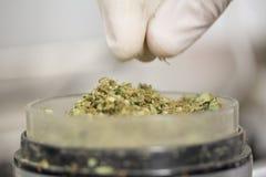 Marihuana makro- Zdjęcie Royalty Free