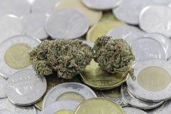 Marihuana na kanadyjczyk gotówce obrazy stock