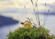 Marihuana oleju koncentrata aka odrobina na szklanym słoju outdoors zdjęcie royalty free