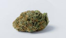Marihuana pączek Zdjęcie Royalty Free