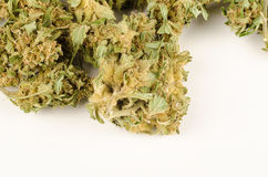 Marihuana pączki Fotografia Royalty Free