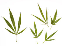 Marihuanaansammlung Lizenzfreie Stockfotos