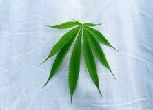Marihuanablätter auf alte Blue Jeans Lizenzfreie Stockfotos