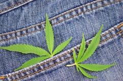 Marihuanablätter auf Blue Jeans Stockfotos