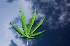 Marihuanablatt auf blauem Boden Stockbild
