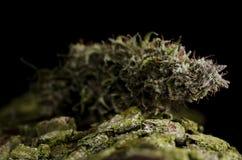Marihuanaknospe auf schwarzem Hintergrund stockbild