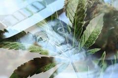 Marihuanawinsten met Honderden, knop & Marihuana Hoog Blad - kwaliteit stock fotografie