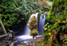 Marihuany pączkowy unosić się przed pięknym krajobrazem z siklawą fotografia royalty free