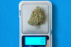 Marihuany rośliny zakończenie up Fotografia Stock