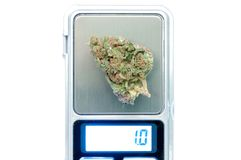 Marihuany rośliny zakończenie up Fotografia Royalty Free