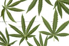 Marihuany siedem liść Obraz Stock
