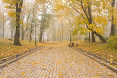 Mariinsky foggy park Royalty Free Stock Photos
